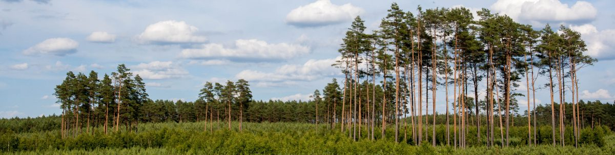 Forests in Science, Practice and Education